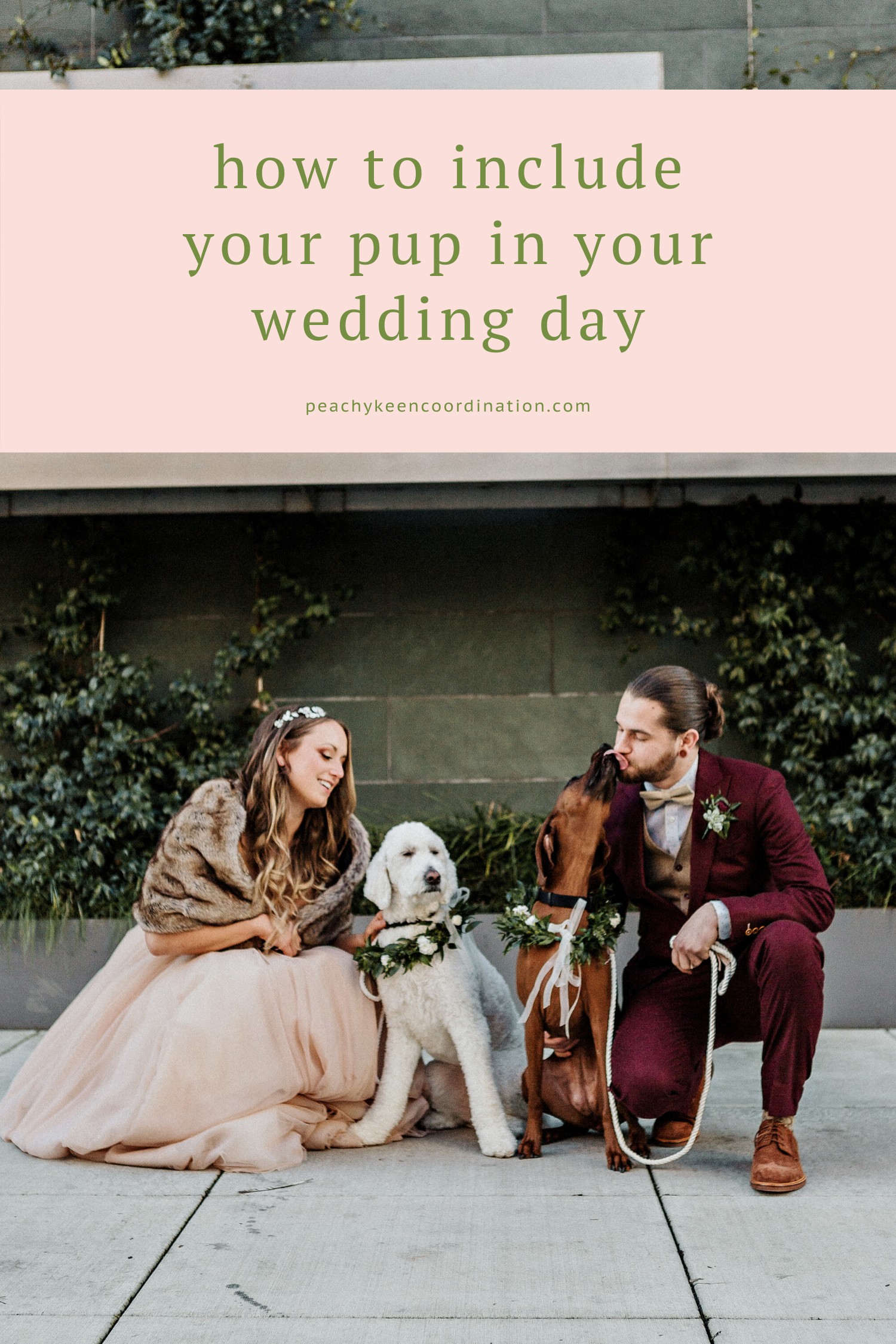how to include dog in your wedding